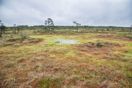 landscape of Kakerdaja bog in central Estonia