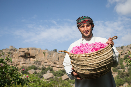 JABAL AL AKHDAR, OMAN - CIRCA APRIL 2016: Omani man picking rose petals