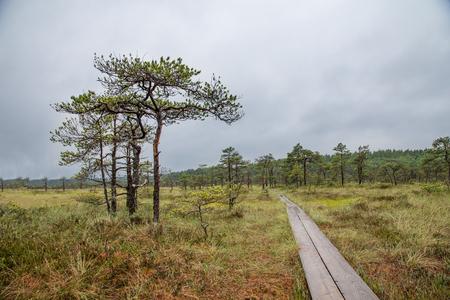 walkway in a Landscape of Kakerdaja Bog in Estonia
