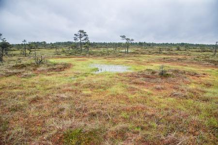 Landscape of Kakerdaja Bog in Estonia