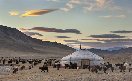 goats around a yurt in Western Mongolia
