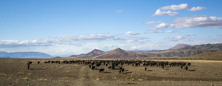 bayan Ulgii, Mongolia, 2nd October 2015: mongolian nomad man herding his animals