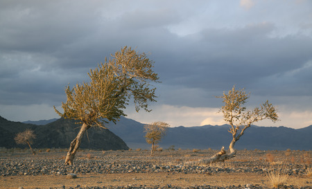 nature of western Mongolia