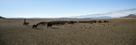 bayan Ulgii, Mongolia, 2nd October 2015: mongolian nomad man herding his animals