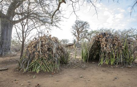 Hütten des Hadzabe-Stammes, wo sie leben Standard-Bild