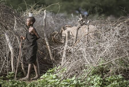 Same, Tanzania, 4th June, 2019:   Maasai  boys herding cows, sending them back into enclose in the middle of their boma (village)