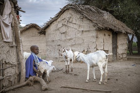 Same, Tanzania, 4th June, 2019:   Maasai  girl holding back baby goats from going to their mother to suck milk, so her mother can come and milk them first