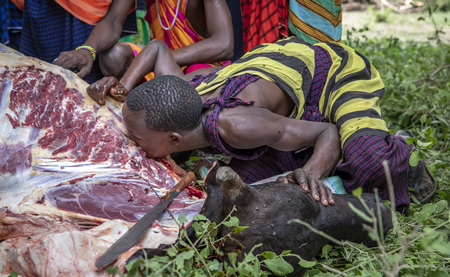 Same, Tanzania, 4th June, 2019:  Maasai man drinking blood our of a neck of freshly killed cow