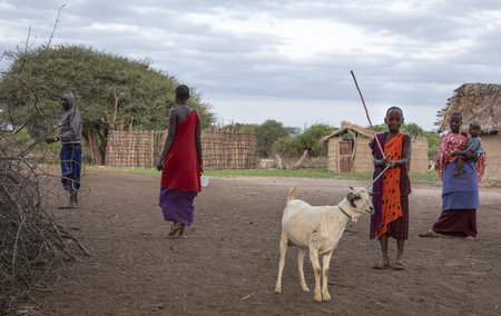 Same, Tanzania, 7th June, 2019:  young Maasai man walking with his goat in a boma
