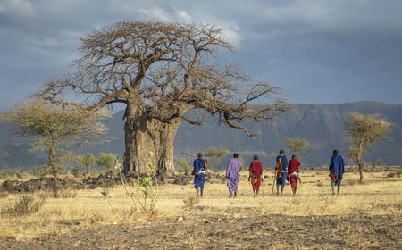 Ngorongoro, Tanzania, 10th September 2019: maasiai warriors at a big Baobab tree