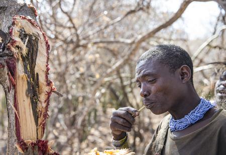 Lake Eyasi, Tanzania, 11th September 2019: Hadzabe man looking for honey in a tree Editorial