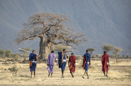 Arusha, Tanzania, 7th September 2019: old maasai warriors walkingin a savannah