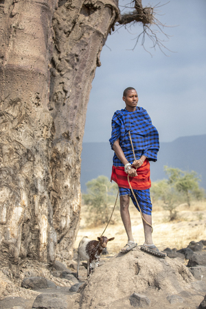 Arusha, Tanzania, 7Th September 2019: Maasai warrior with a goat under a large baobab tree
