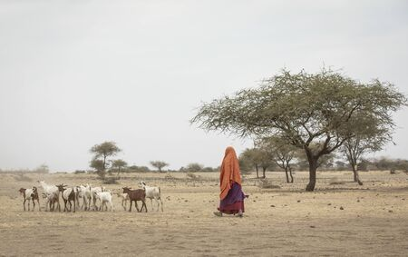 maasai woman with her goats, taking them home at sunset Stock Photo