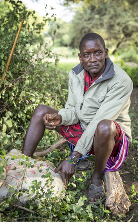 same, Tanzania, 5th June 2019: young maasai man sitting with his leg in a cow stomach to get a releaf for his twisted anckle Editorial