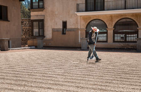 Antigua, Guatemala, 4th March 2020: man moving coffee beans on the ground to help them dry faster in sun Editöryel