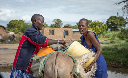 Same, Tanzania, 11th June 2019: maasai ladies securing water containers on a donkeys back
