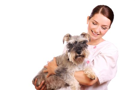 A pretty veterinarian holding a Miniature Schnauzer and smiling at him in a caring way. Stock Photo - 5085060