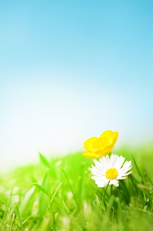 buttercup: A daisy and a buttercup on grass in front of a blue sunny sky  Stock Photo