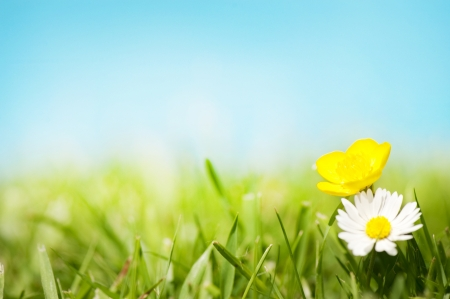 buttercup: A pretty Daisy and Buttercup on grass in front of a blue sunny sky.