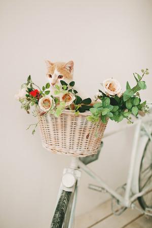 bicicleta retro: Gato que se sienta con las flores en una cesta de mimbre de color blanco de la bicicleta retro en el fondo blanco