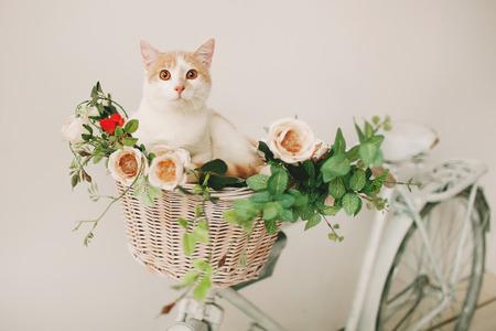 白い背景に白いレトロな自転車の枝編み細工品バスケットの花と座っている猫