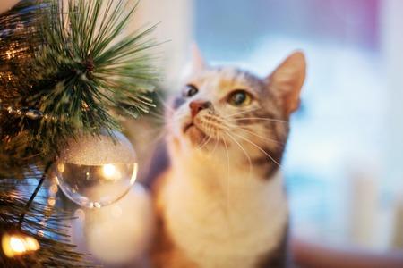 Kerstmis kat in de buurt van de boom met lampjes