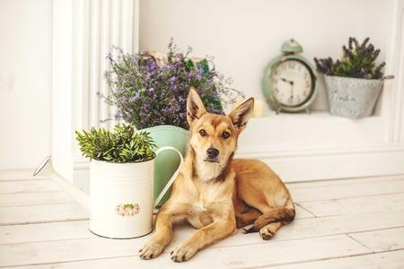 개 벽난로 근처 구식 장식 된 방에 빛 머리를 가진 개