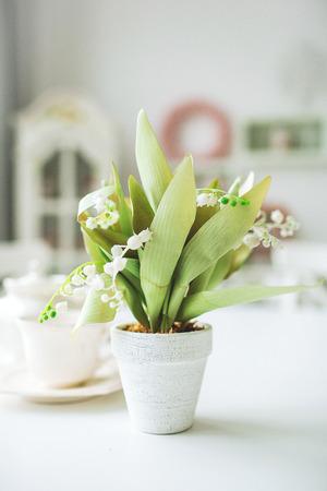 Schöne Weiße Blumen In Einem Topf Auf Einem Weißen Hölzernen ...