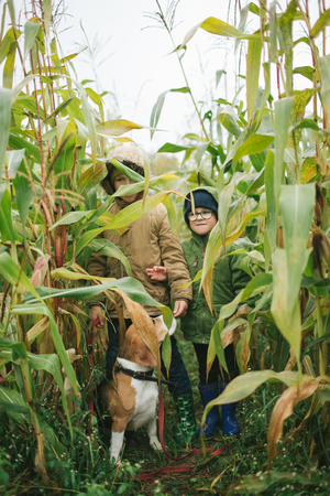 Two little brothers with cute beagle in corn field
