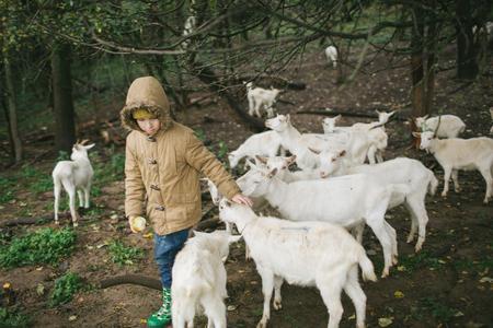 Kleine kinderen spelen en eten met geiten op de boerderij van geitenkaas buitenshuis