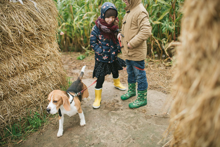 Two brothers and sister with beagle on corn field with beagle