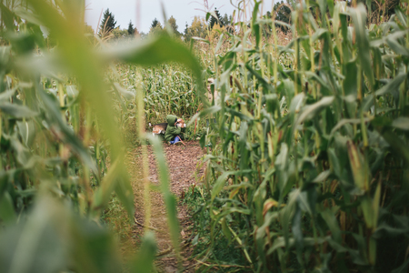 Little boy with beagle in the cornfield in autumn