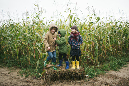 Two little brothers and sister standing in corn field and smiling outdoors Stok Fotoğraf