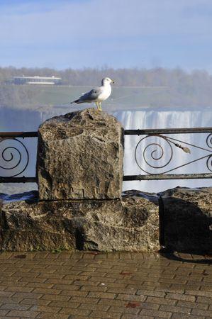 big scenery: Seagull on rock at edge of Niagara Falls Stock Photo