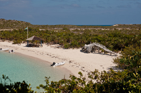 Horizontal photo from above of the deserted beach in warderick wells, exuma, bahamas.  large bones of whale are on the coast.