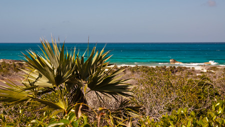 Scenic photograph of the ocean with beach, sand and trees in foreground.  Copy space in clear blue sky.