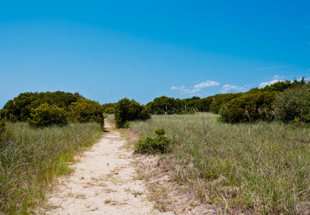 Sandy walking path through shrubbery and green trees.  bright blue sky with room for copyspace