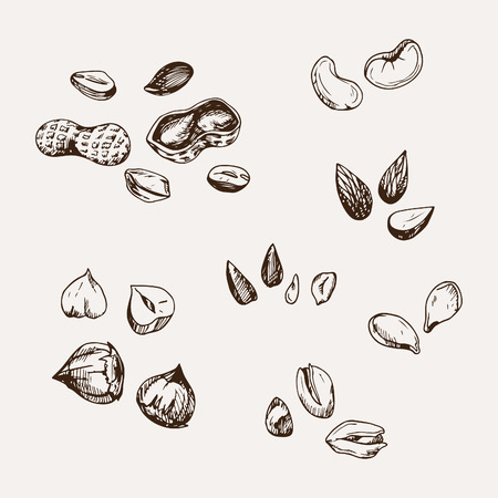 set of hand drawn nuts. Vectores