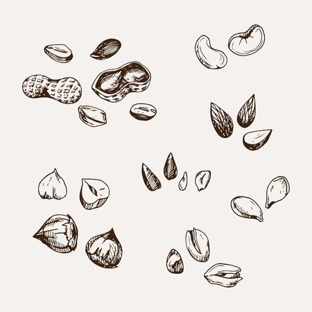 set of hand drawn nuts. Stock Illustratie
