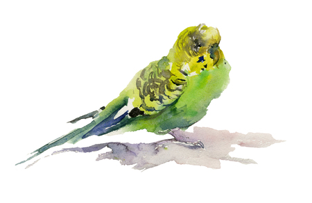 green and yellow parrot on white background watercolor painting