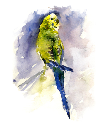 green and yellow parrot on blue background watercolor painting