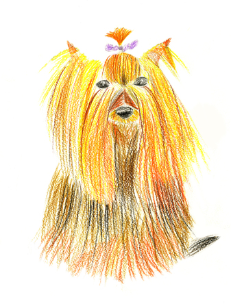 Little dog (red and yellow yorkshire terrier) with small purple bow on white background. Hand drawn. Childrens pencil drawing simulation.