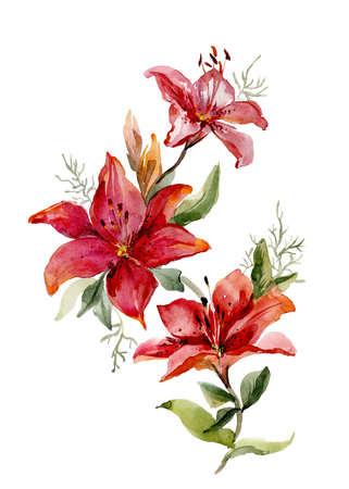 Beautiful red tiger lilies on white background.  Watercolor painting. Hand drawn. Vertical orientation.  Stock Photo