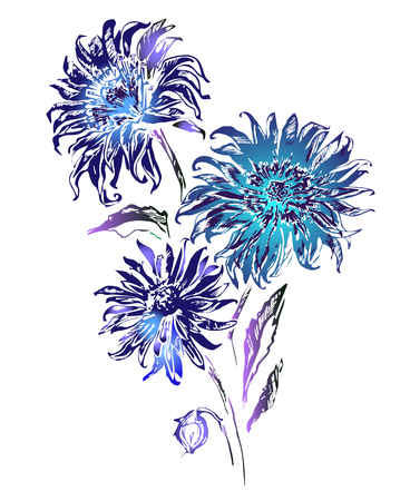 aster: Beautiful flowers isolated on white background. Tints of blue and purple. Can be used for greeting cards, cloth printing, fabric.