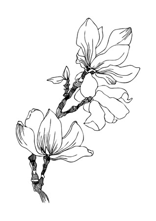 Magnolia flowers on a twig. Black and white vector illustration.