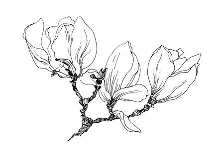 Magnolia flowers on a twig. Black outline on white background. Vector illustration.