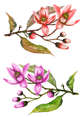 Orange tree flower on a twig. Floral set of two colorful twigs. Spring flourish. Isolated on white background.  Watercolor painting. Hand drawn. Springtime illustration.