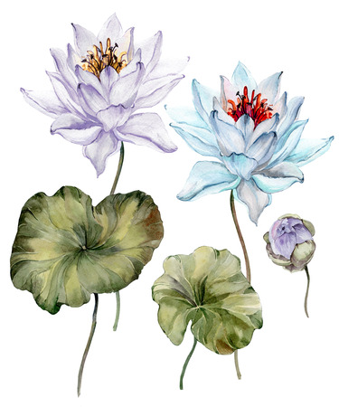 Beautiful light blue and purple lotus flowers. Floral set (flower on stem, bud and leaves). Isolated on white background.  Watercolor painting. Hand drawn illustration.  Stock Photo