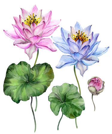 Beautiful bright blue and purple lotus flowers. Floral set (flower on stem, bud and leaves). Isolated on white background.  Watercolor painting. Hand drawn illustration.